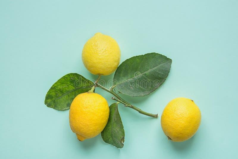 Limones amarillos brillantes maduros en rama con las hojas verdes en fondo de la turquesa Cosméticos orgánicos del cuidado del cu fotos de archivo libres de regalías
