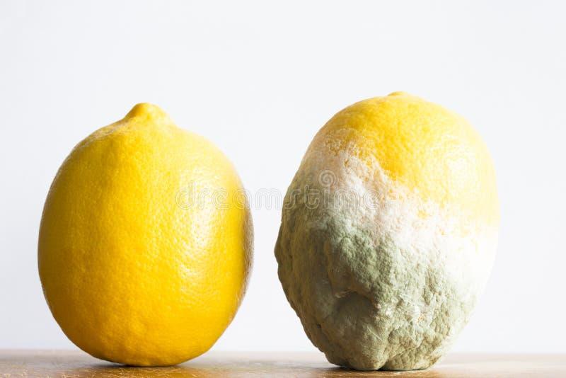 Limones putrefactos y frescos aislados en el fondo blanco imagen de archivo libre de regalías