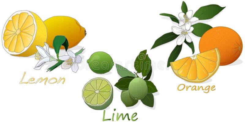 Limoni e limetta Arancio, limone, calce Isolato su priorità bassa bianca illustrazione vettoriale