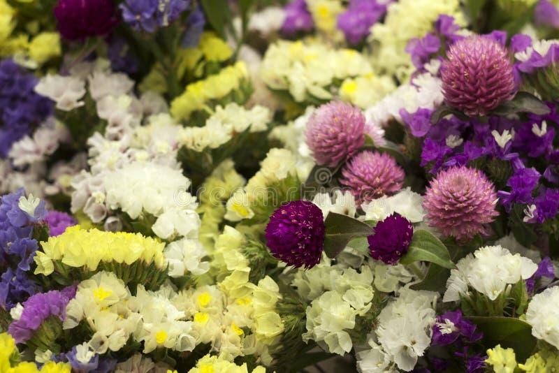Limonium, Gomphrena globosa - viele bunten Blumen in einem Blumenstrauß Gelbe, weiße, blaue und rosa Trockenblumeblumen, Hintergr lizenzfreie stockfotos
