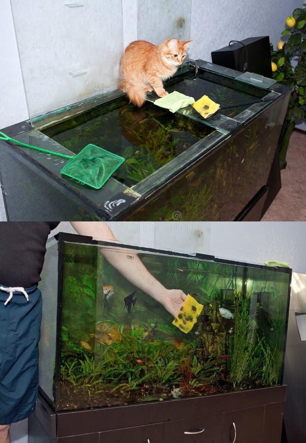 Limpando o aquário imagem de stock