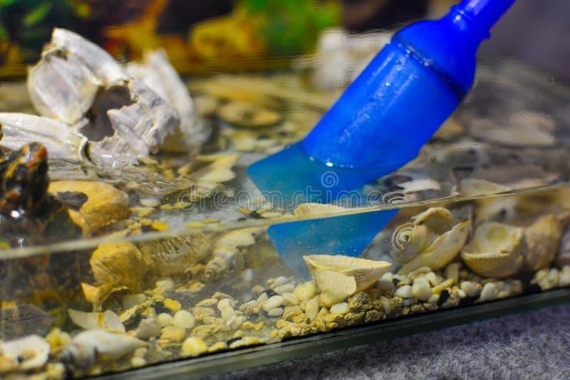 Limpando o aqu?rio Água de bombeamento fora do aquário Close-up Ferramenta mais limpa do cascalho do sif?o no aqu?rio Peixes do a imagens de stock