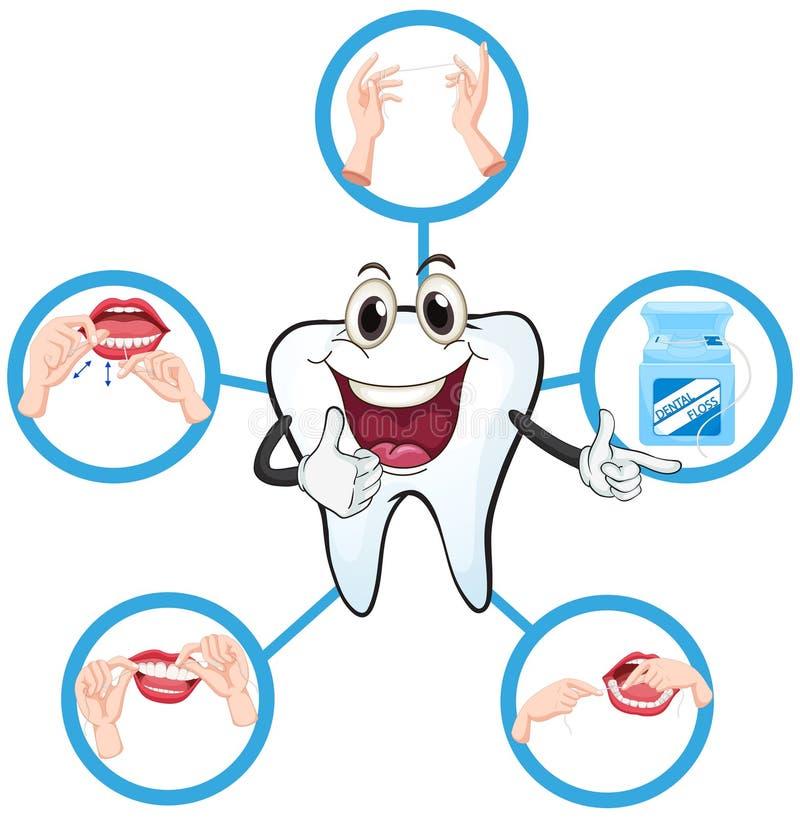 Limpe o dente e o processo de flossing ilustração stock
