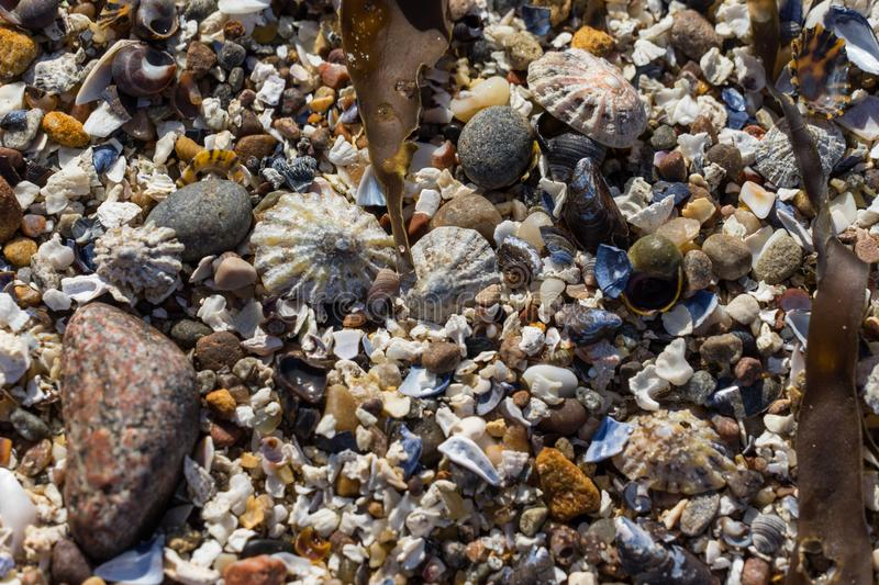 Limpet shells, shells and stones on a beach stock photography