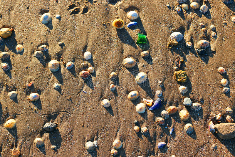 Limpet shells on a sandy beach. Background royalty free stock photos
