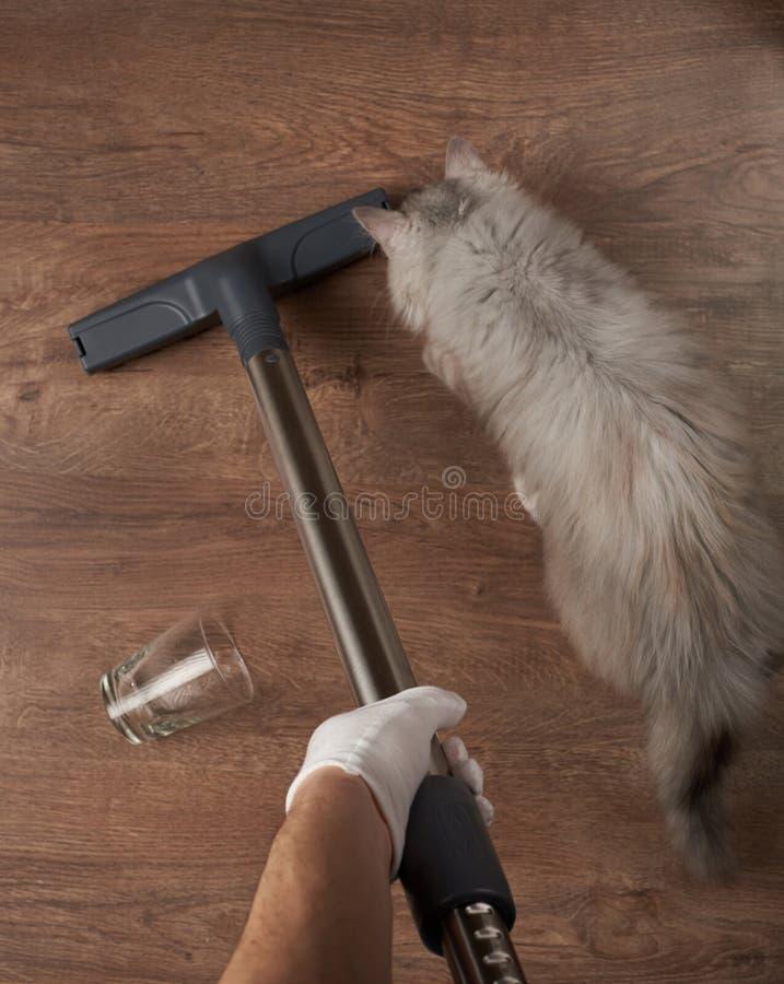 Limpeza após o serviço do animal de estimação imagens de stock