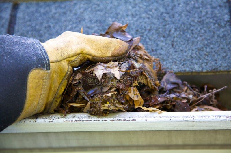 Limpeza da queda - folhas na calha fotos de stock