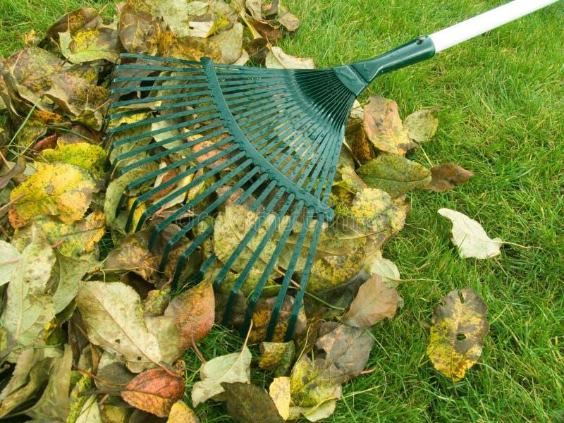Limpeza das folhas de outono fotografia de stock royalty free