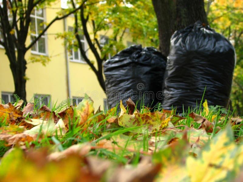 Limpieza del otoño imágenes de archivo libres de regalías