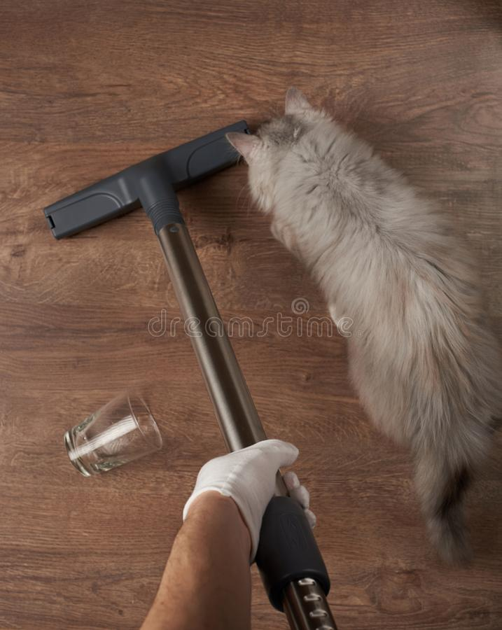 Limpieza después de servicio del animal doméstico imagenes de archivo