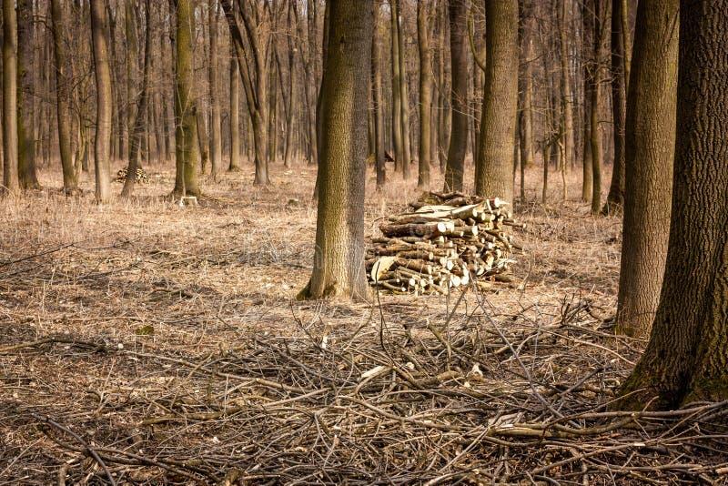 Limpieza en el bosque imágenes de archivo libres de regalías