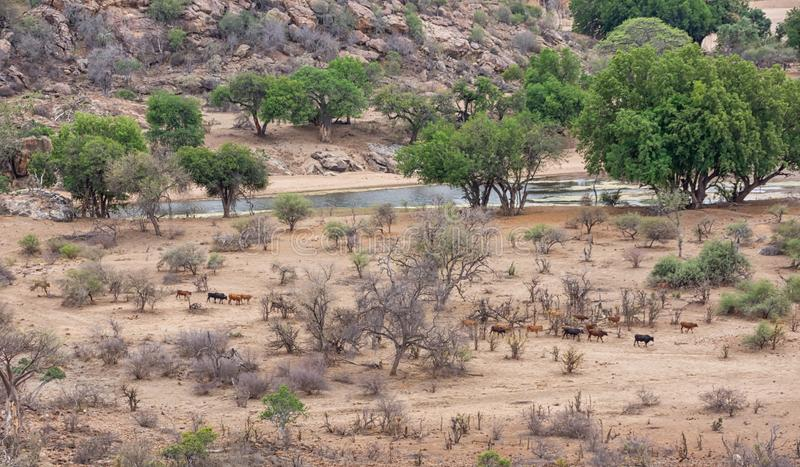 Limpopo River landscape. A section of the Limpopo Riverbed in Limpopo Province, South Africa royalty free stock photo
