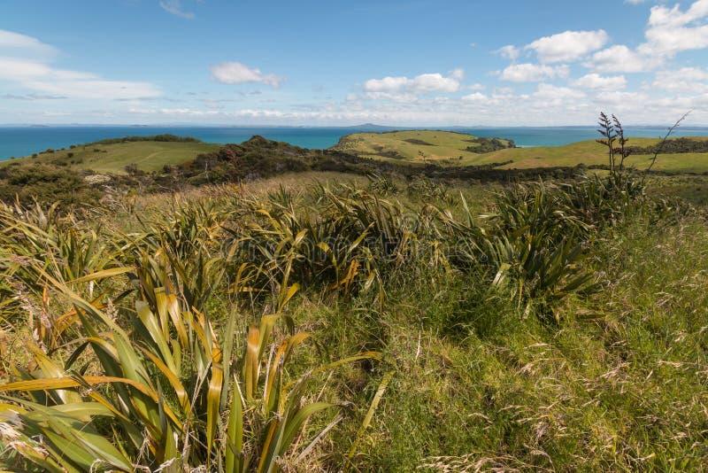 Lin du Nouvelle-Zélande sur Rolling Hills photographie stock