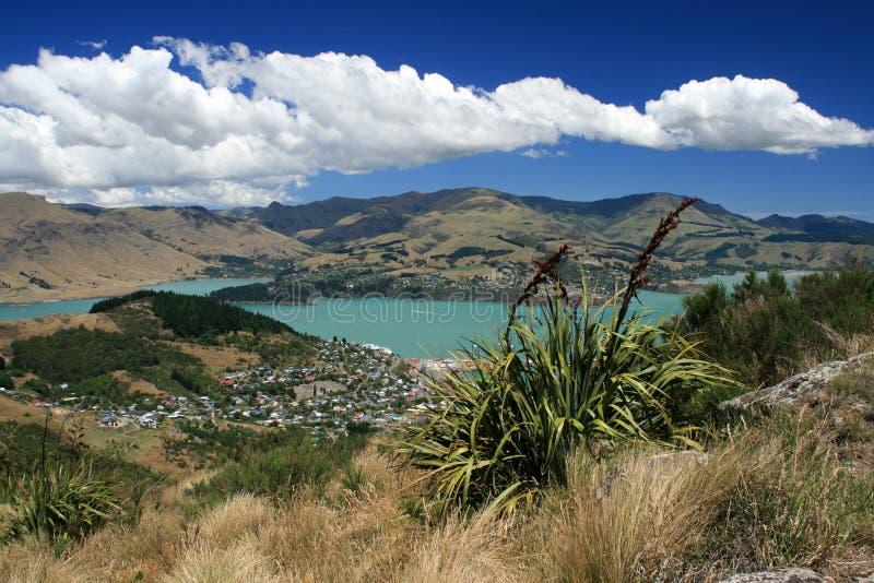 lin New Zealand arkivfoto