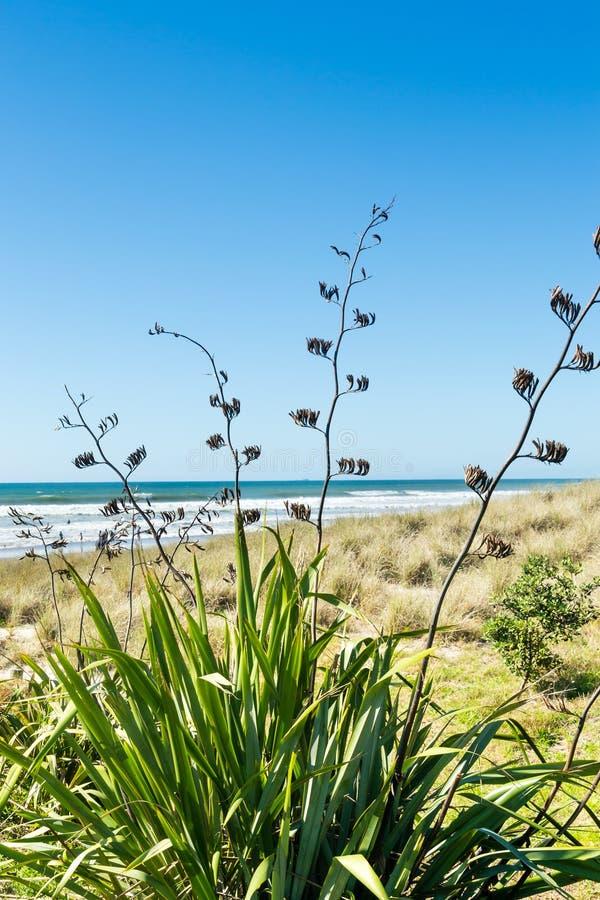 Linblommor och växter på stranden fotografering för bildbyråer