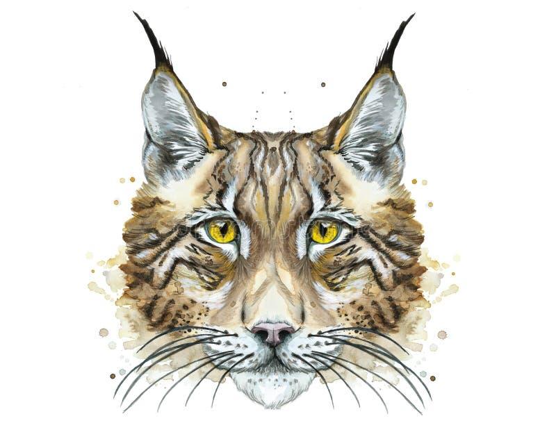 Lince despredador animal de dibujo pintado de la acuarela stock de ilustración