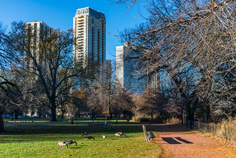 Lincoln Park Chicago Scene en otoño con los gansos cerca de la charca del norte fotografía de archivo