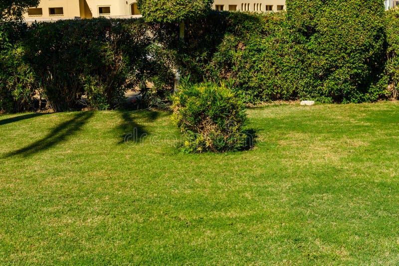 Linda grama verde no parque urbano imagem de stock