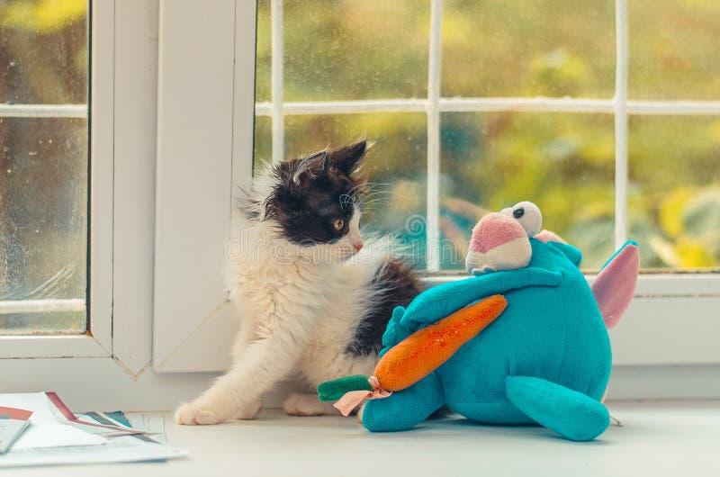 Linda janela de gatinho feliz planta feliz fotografia de stock