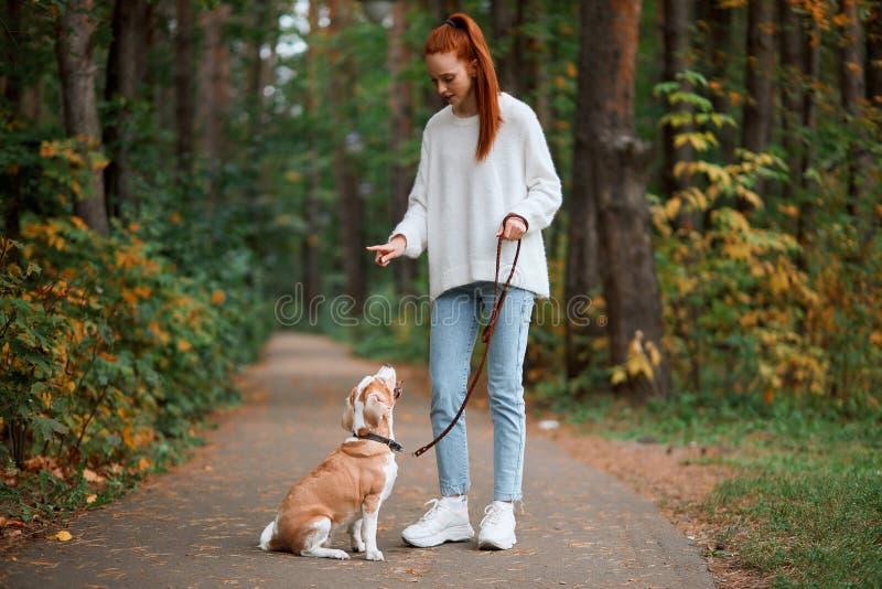 Linda jovem mulher com um jovem cão brincalhão se divertindo ao ar livre imagens de stock