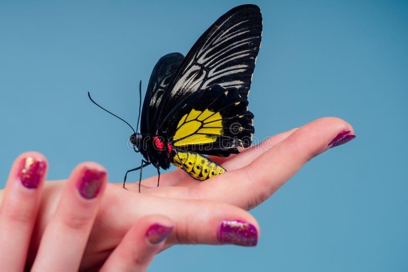 Linda mulher nua em fundo azul menina e uma linda borboleta fotos de stock