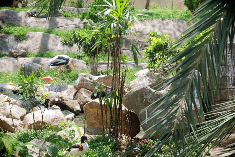 Linda paisagem com flamingos no jardim fotos de stock