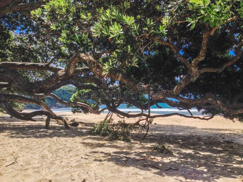 Linda praia de Waihi na Baía da Prenda, Ilha do Norte, Nova Zelândia fotos de stock royalty free