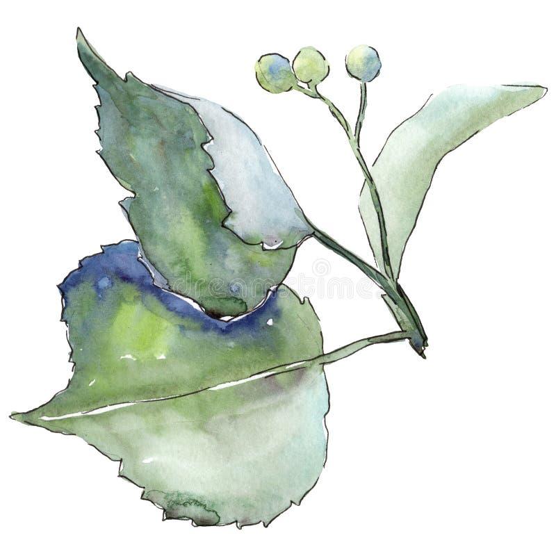 Lindebladeren in een geïsoleerde waterverfstijl vector illustratie