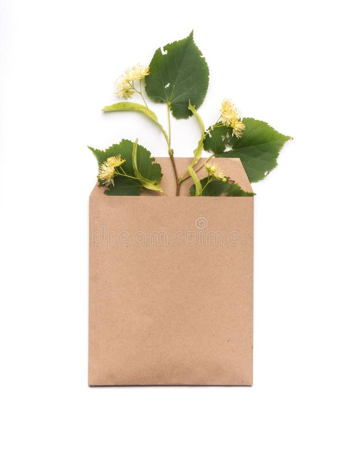 Lindebloemen in ambachtdocument envelop op witte achtergrond stock foto