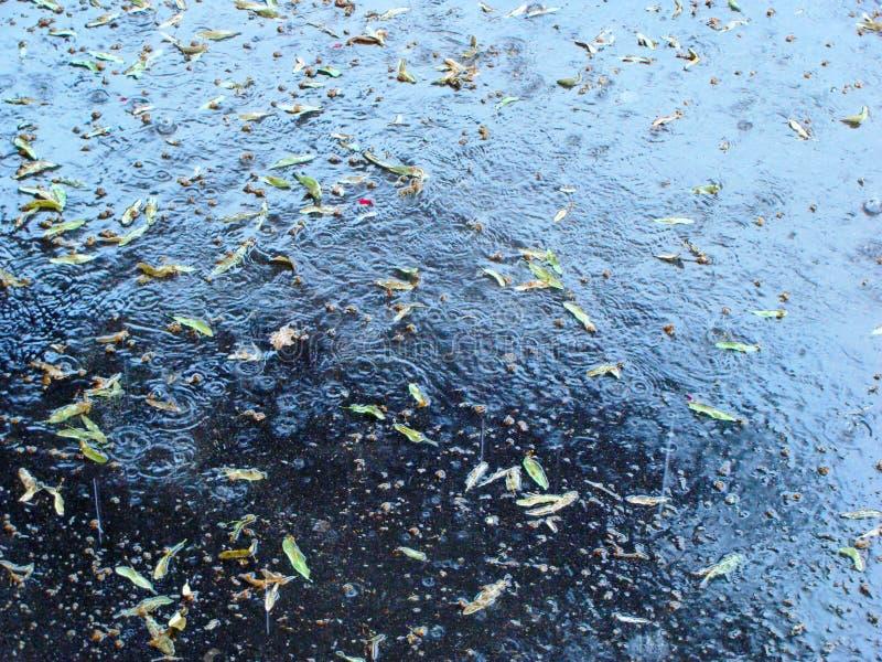 Lindebloemen na de zware regen royalty-vrije stock afbeeldingen
