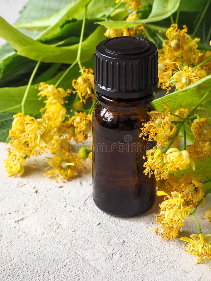 Linden essential oil bottle with fresh linden flowers on grey background stock photo