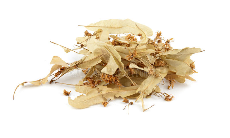 Linden flowers. Dried linden flowers isolated on white royalty free stock image