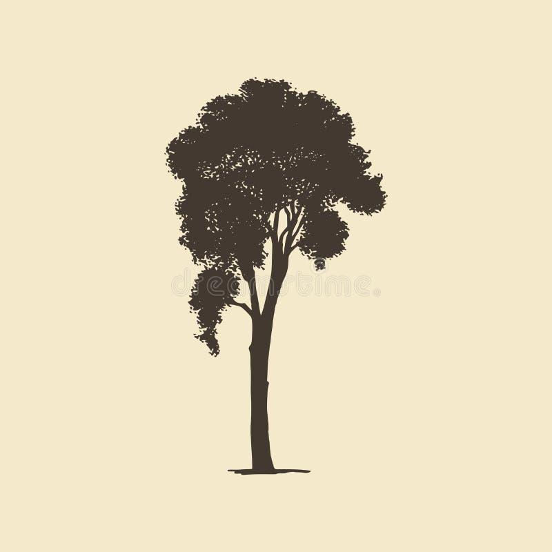 Linden o Ash, silhouette disegnata a mano Schema vettoriale di un albero di conifere o di deciduo royalty illustrazione gratis