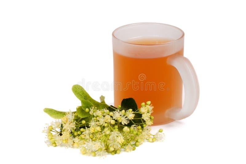 Linden tea cup royalty free stock photos