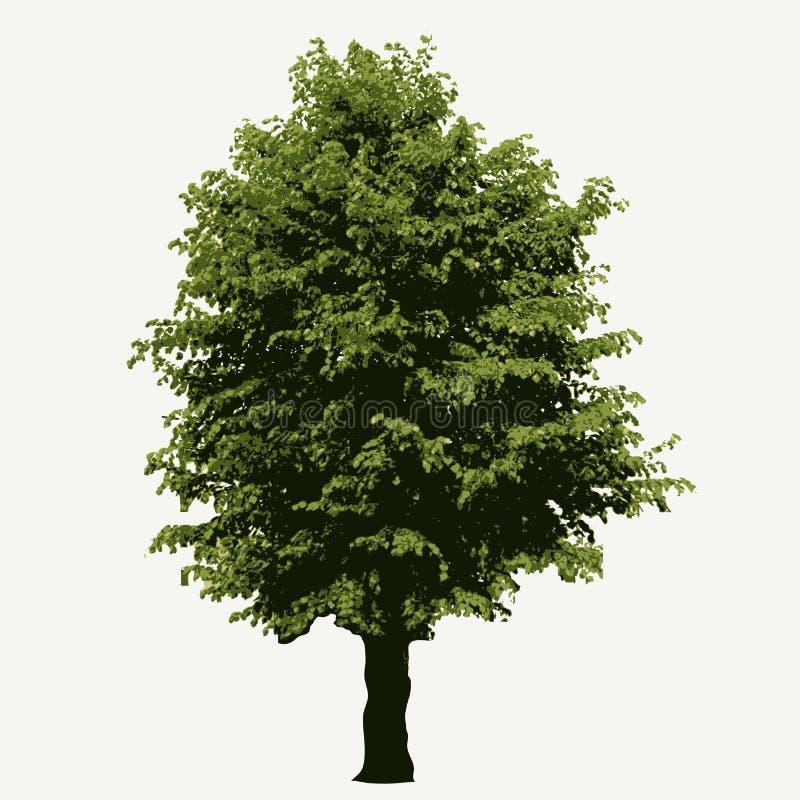 Linden Tree illustration libre de droits