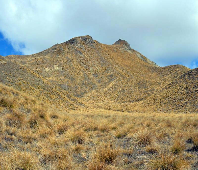 Lindis Pass Tussock Detail, Central Otago, Nowa Zelandia obraz stock