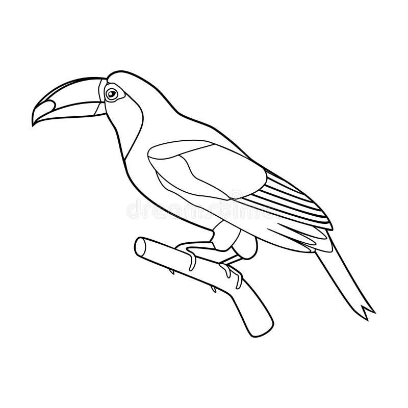 Lindo agraciado hermoso del tucán en una rama ilustración del vector