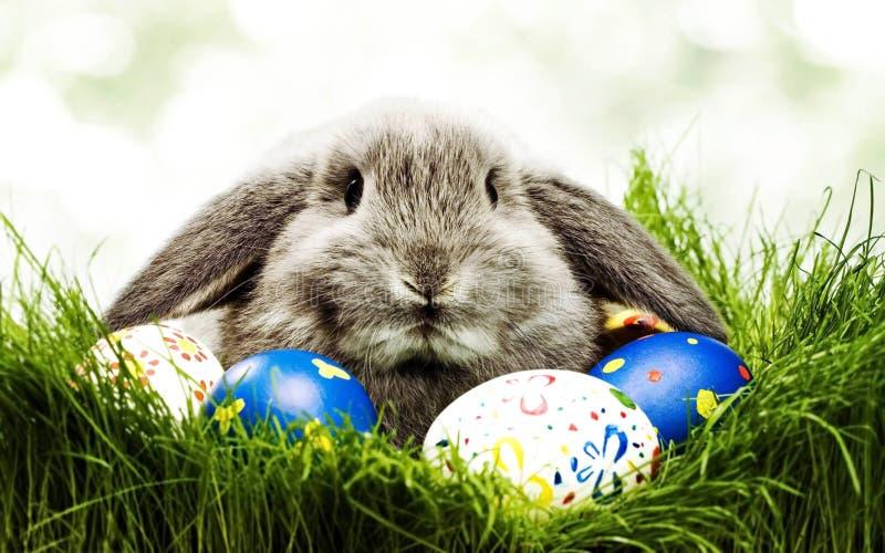 Lindo poco conejo con los huevos de Pascua en hierbas Símbolo de Pascua Conejito-Pascua en la cultura de alguna Europa occidental imágenes de archivo libres de regalías