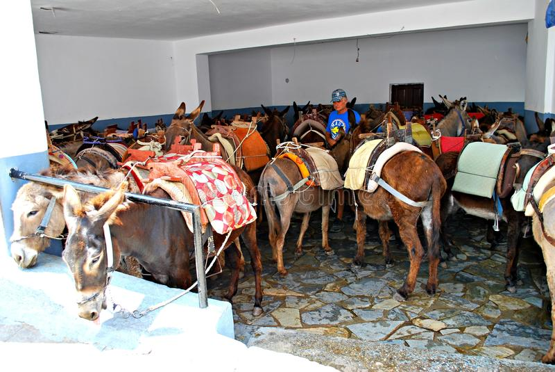 Lindos, view, Phodes island animals donkeys royalty free stock photography