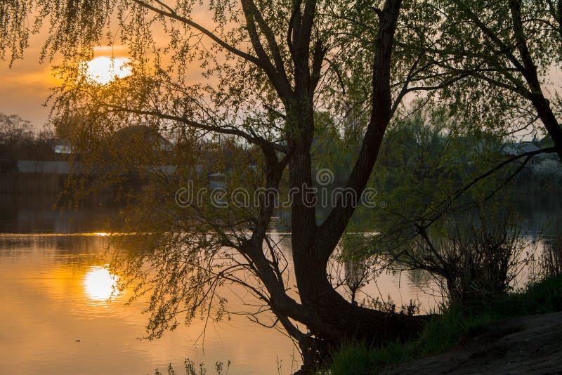 Lindträd med bakgrundssolnedgång royaltyfri fotografi