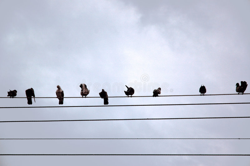In a line. Birds sitting inline on a telephone line royalty free stock images