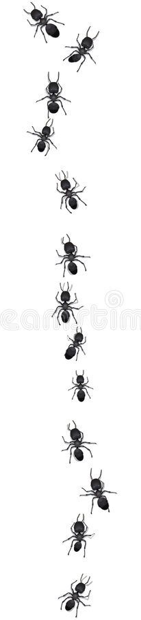 Download Line of ants on white stock vector. Illustration of white - 7134304