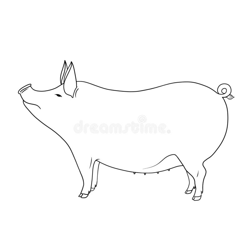 Line art farm animal cute pig hand drawn illustration isolated on white background royalty free illustration