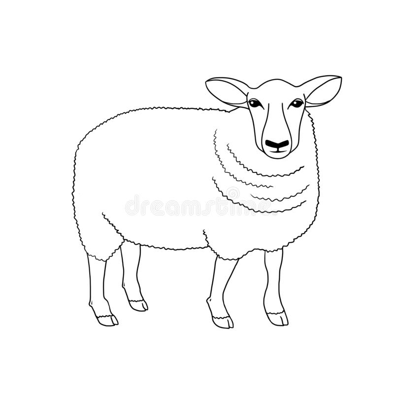 Line art farm animal sheep hand drawn illustration on white background royalty free illustration