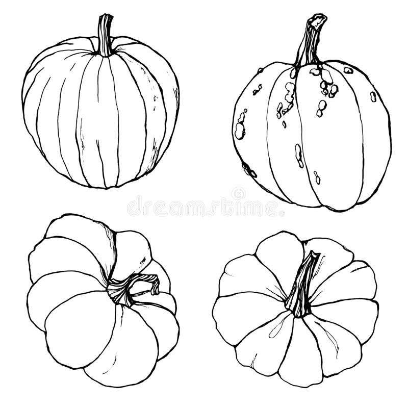Line art set for autumn festival. Hand painted traditional pumpkins with branches isolated on white background vector illustration