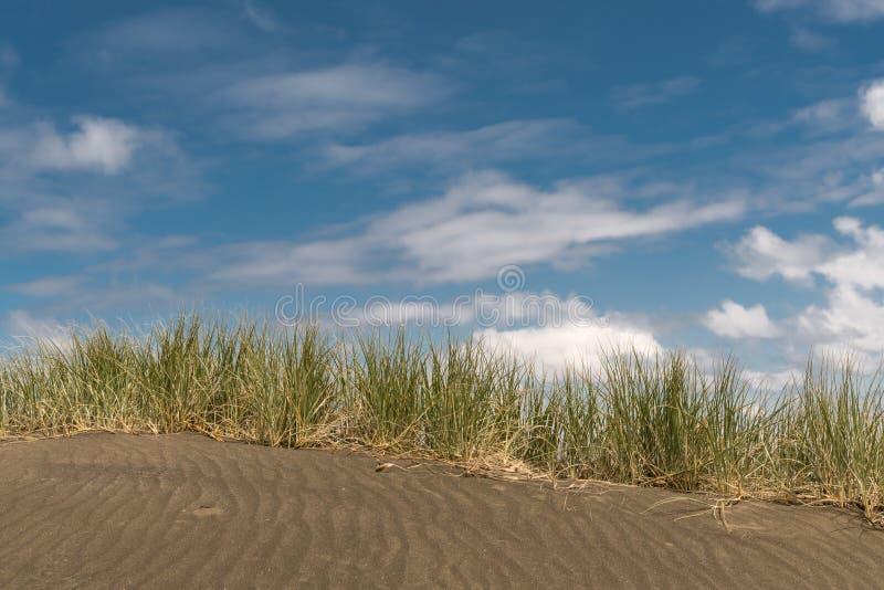 Line of beachgrass in the dunes of Karakare Beach. Auckland, New Zealand - March 2, 2017: Dark sand dune with horizontal line of beachgrass, marram, under blue stock image