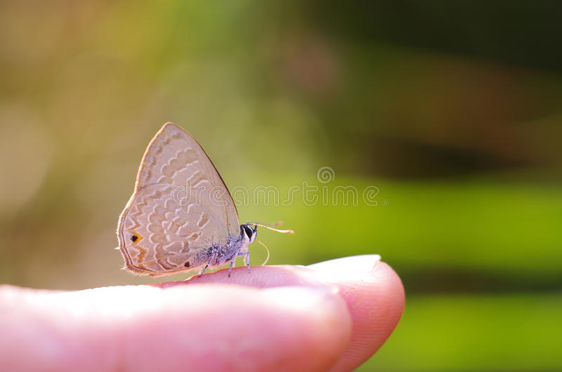 Line-blue Butterfly on the finger royalty free stock photos
