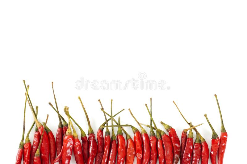 A line of bright red Thai bird chiles isolated on a white background with copy space royalty free stock images