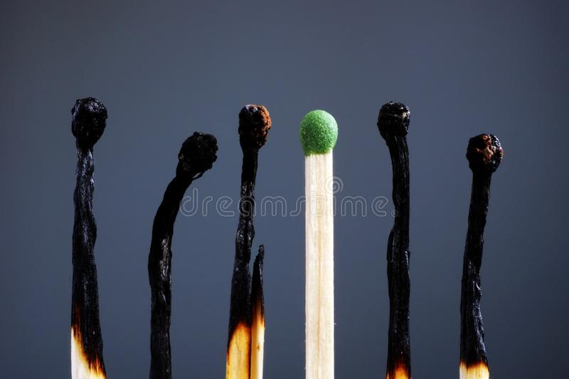 Line of burnt matches and one brand new. Individuality, leadership, burnout at work and energy stock photography