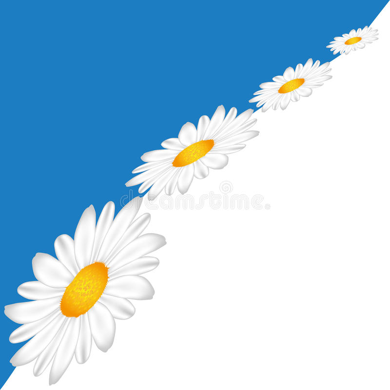 Download Line of Chamomile stock vector. Illustration of floral - 19252276